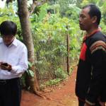 Người trồng cà phê Đắk Lắk được vay vốn ưu đãi