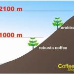 3 vùng trồng cà phê Arabica ngon nhất Việt Nam